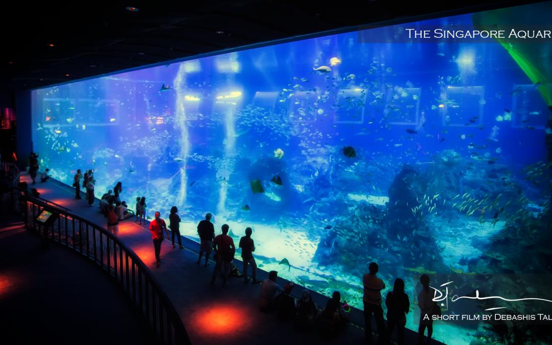 The Singapore Aquarium