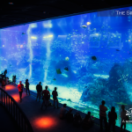 The Singapore Aquarium