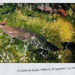 Big Fish at Tanglin Village