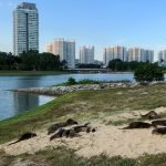 The Singapore Otters